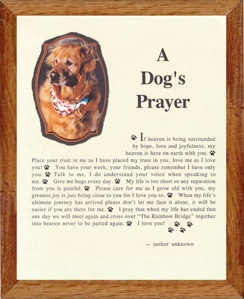 Framed Memorial Pet Poems from Mountian Egde | Rainbow ...